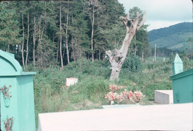 Elder Daniel Choc's grave to the left of the dead tree