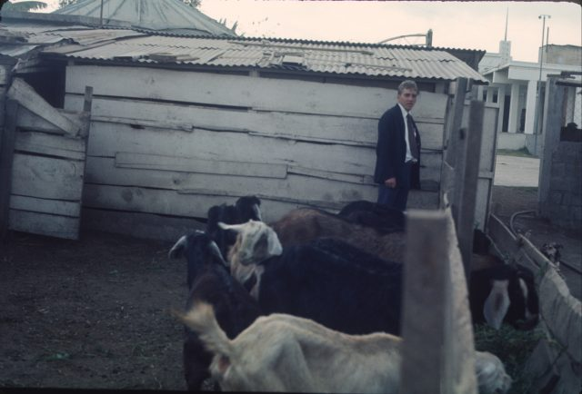 Elder Frischknecht with the goats at the Patzicía co-op behind the church
