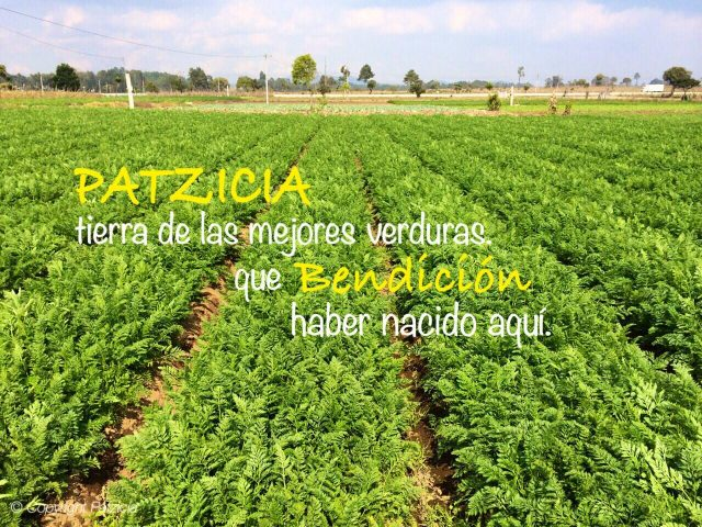 Patzicía fields