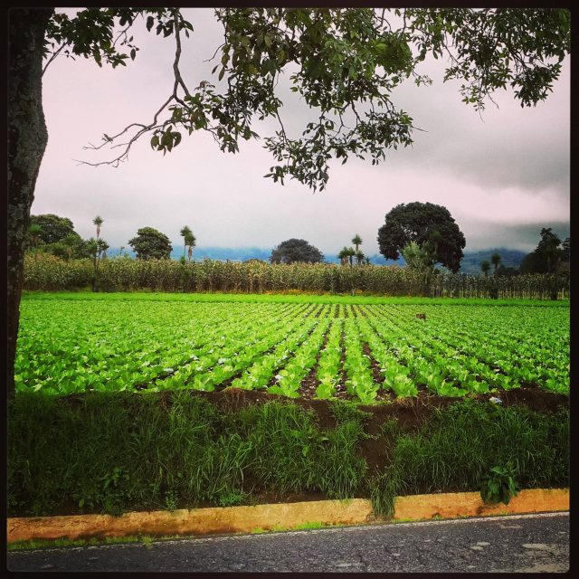 Patzicía fields
